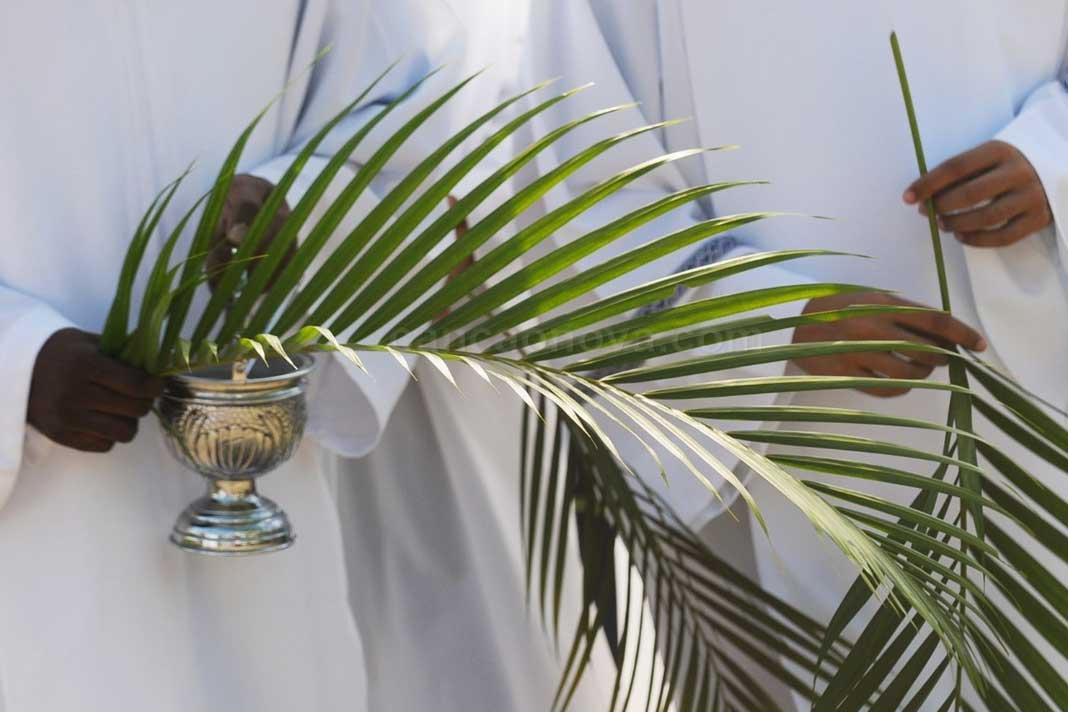 O Domingo de Ramos e a simbologia das folhas de palmeiras