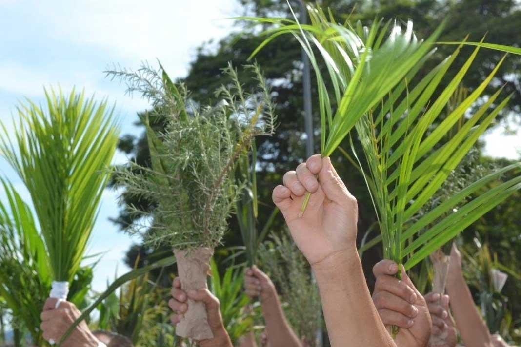 O Domingo de Ramos 2020 e a simbologia das folhas de palmeiras